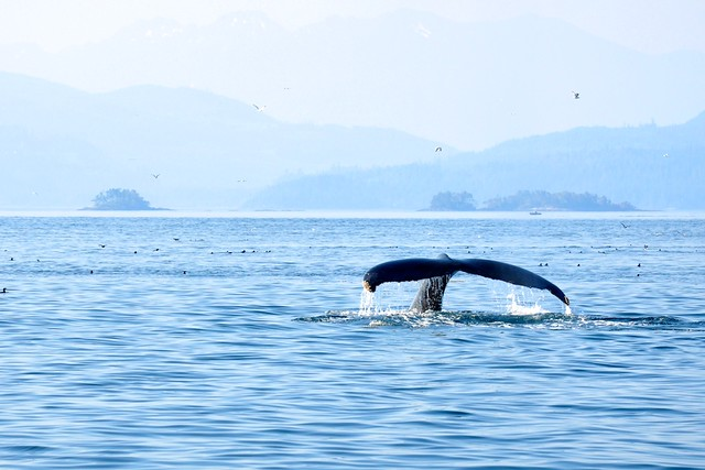 a description and discussion about whales Summary: this discussion focuses on the use of orca whales in captivity and the laws and regulations that govern such use it then analyzes the legal issues these facilities face as a consequence.