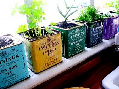 Tea Container Planters | by GothicBohemian