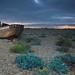 Sea of Shingle