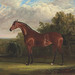1795-1865,Negotiator, a bay racehorse in a landscape