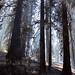 Yosemite - forest fire