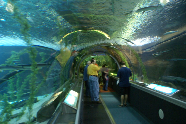 aquarium mall of america flickr photo