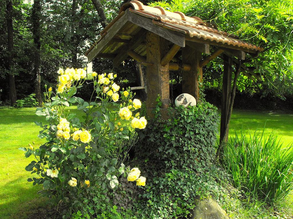 Sc ne de mon jardin le rosier graham thomas encore for Mon jardin 3d