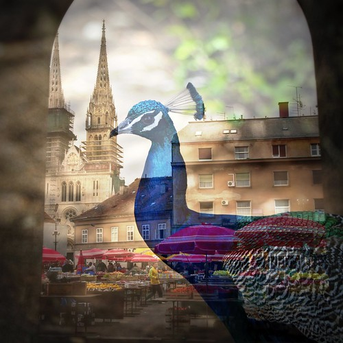 Attack of the Giant Peacock, Zagreb | by SeenyaRita