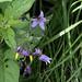 Wildflowers C20100627 127