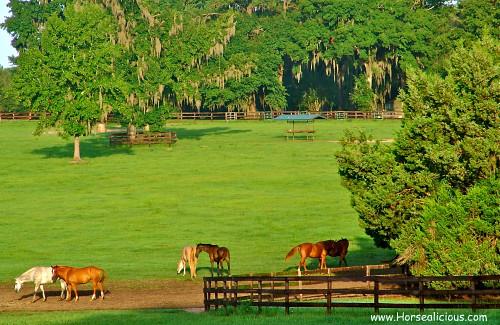 Beautiful ocala horse farm susie blackmon flickr for Farm house pics