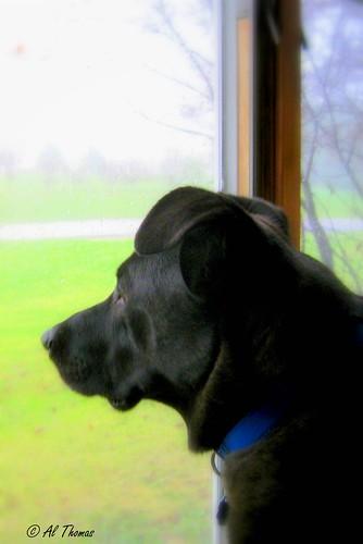 Dog Staring At Food Licking Lips