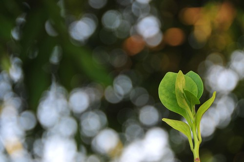 green bud | by MelindaChan ^..^