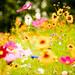 Flowers, Soustons, France