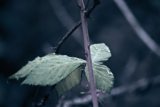 Thornes and Leafes | by kirberich