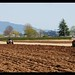 Waikato Vintage tractor ploughing