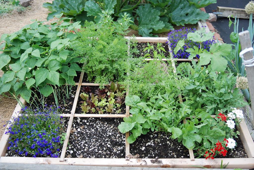 Square Foot Gardening Square Foot Gardening Example Flickr