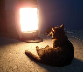 Toasted Cat | by Kaptain Kobold