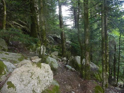 Dans les sous-bois de la trace cairnée Funtanedda - Apaseu