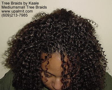 Tree Braids: Curly TreeBraids, or Interlock | Tree braids ...