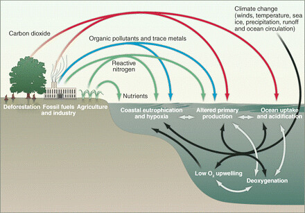 Anthropogenic impact to oceanic biodiversity
