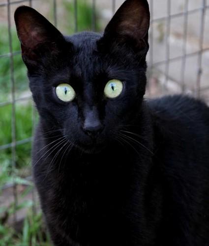 Black Cat Pro Heater
