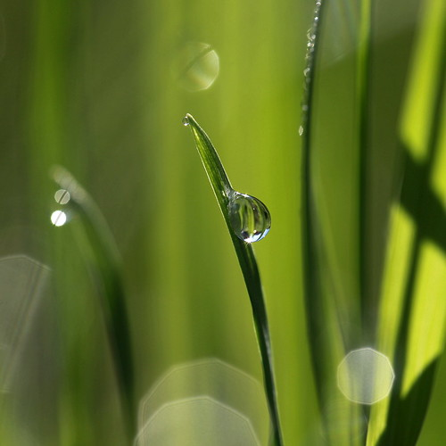 on the wet grass | by jenny downing