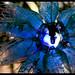 Un estel blau a la plaça de Rovira i Trias