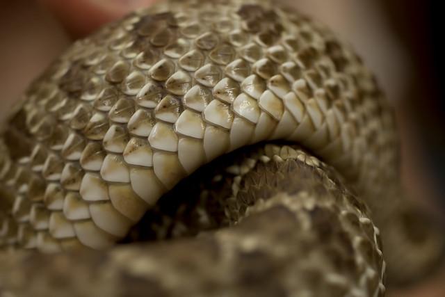 Diy Snake Scales Crafts