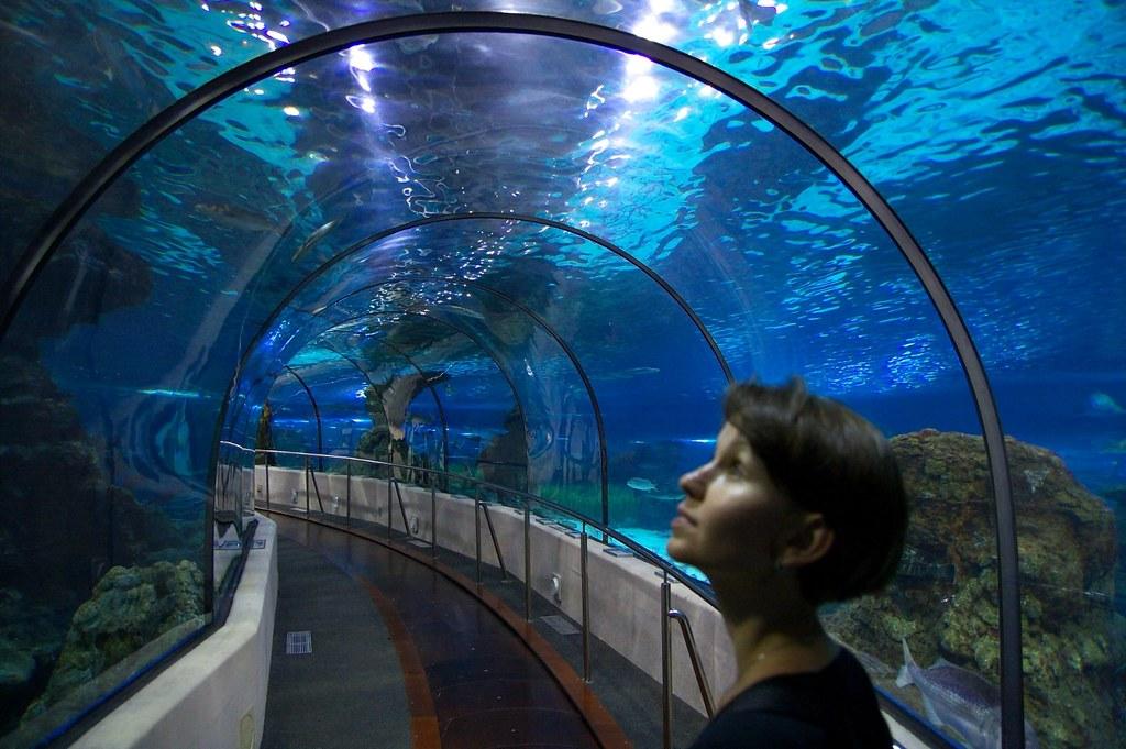 l aquarium in barcelona l aquarium in barcelona flickr