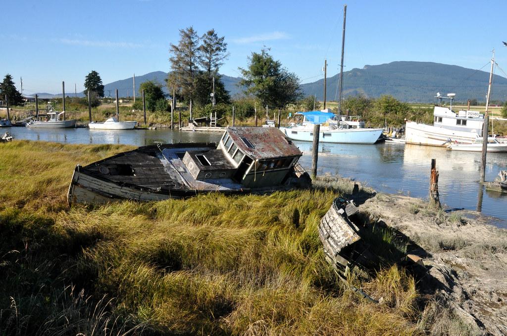 Old Boats Seen Along Bay View Edison Road On Samish Bay