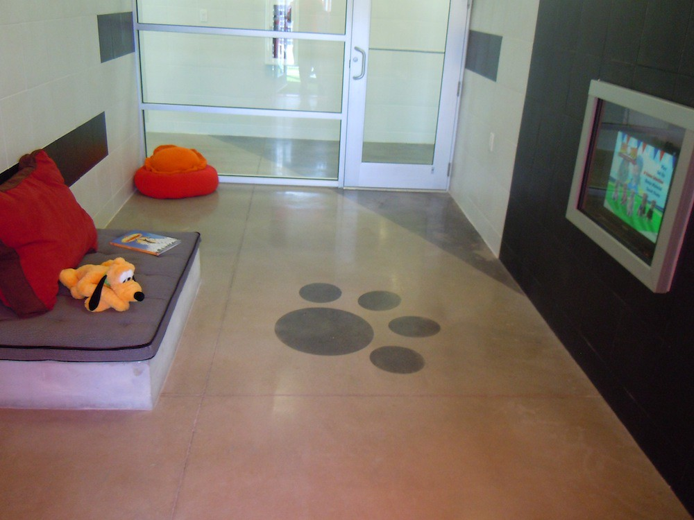 Vip luxury suite with bed and flat screen tv for pets for Dog kennels near disney world
