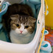 in a cat carrier