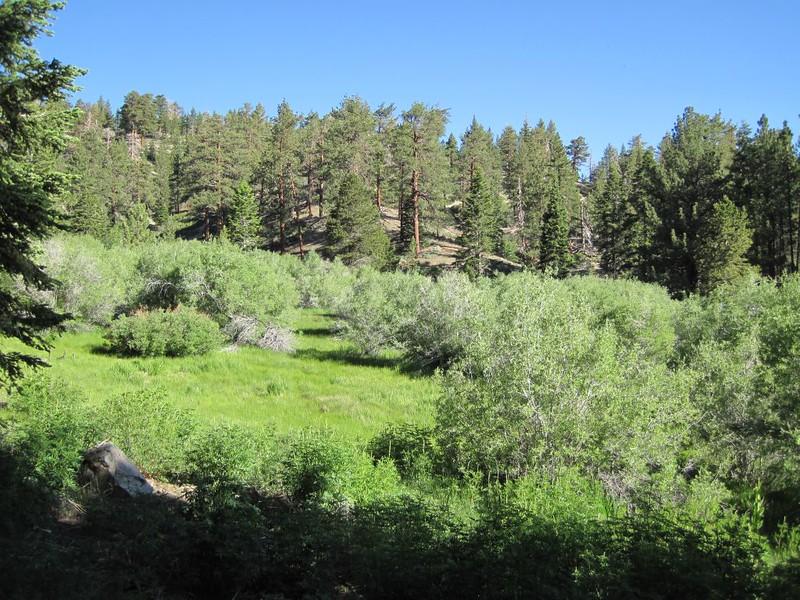 Fish Creek Meadow, not far below the Fish Creek Campground