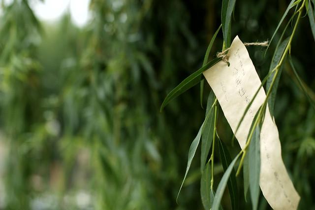 L arbre voeux flickr photo sharing - L arbre a souhait ...