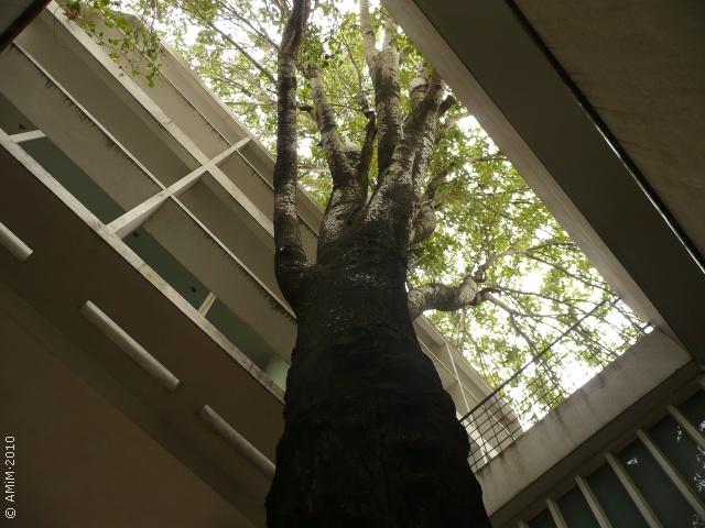 100420 07 La Plata Casa Curuchet Arq Le Corbusier A
