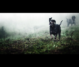 Sadie - Bluetick coonhound | by Zach Boumeester