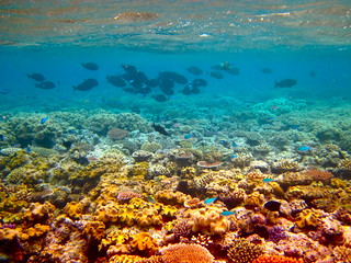 The Great Barrier Reef - 189 | by Kyle Taylor, Dream It. Do It.