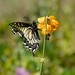 Butterfly on Kings Mountain, Oregon