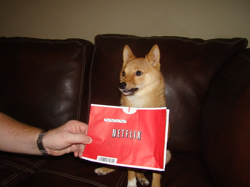 taro the shiba and netflix, take 1! | by _tar0_