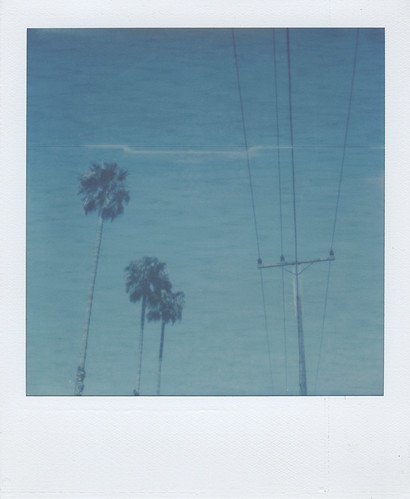 PX70_PalmTreesWires | by LeandroF