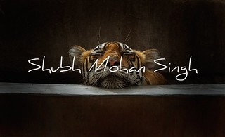 Portrait of a Sleeping Tigress | by Shubh M Singh