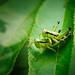 Grasshopper Porn