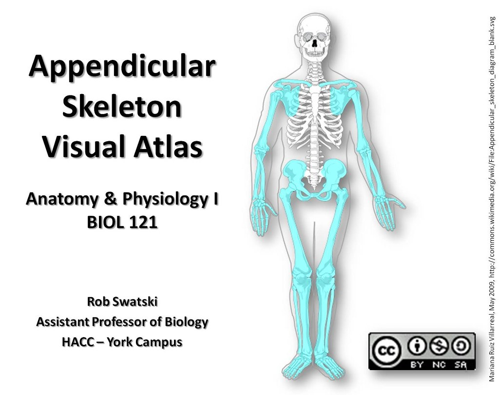 Title page - Appendicular Skeleton Visual Atlas, page 1 | Flickr