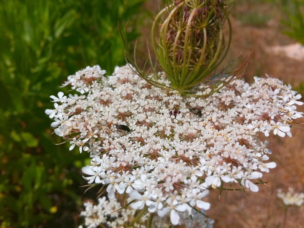 Heart shaped flower une fleur des champs en forme de c ur flickr - Fleur en forme de coeur ...