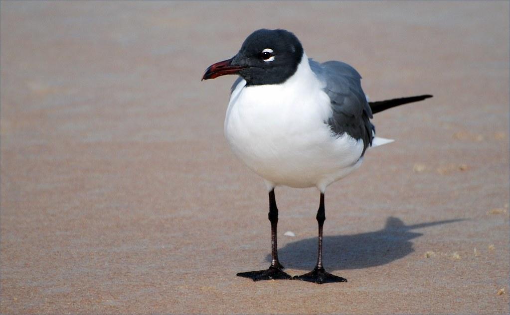 900 Free Black White Birds amp Bird Images  Pixabay