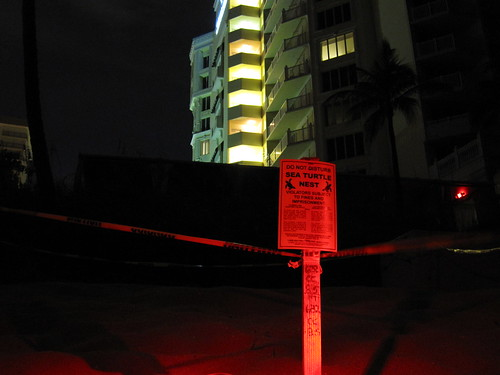N. Ft. Lauderdale Sea Turtle Lighitng Issues | by Sea Turtle Oversight Protection