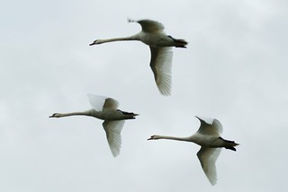 flying in formation | by john/