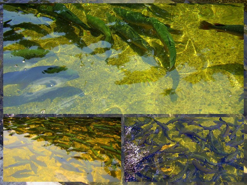 Fish hatchery in west virginia ruknet cezzar flickr for Virginia fish hatchery