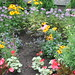 Shakespearean Garden, Stratford Ontario_2790