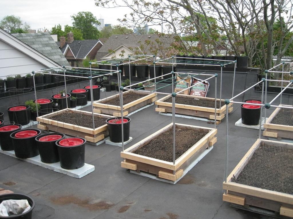 "Rooftop Vegetable Garden 2010 | Adapted raised 8"" deep x 2 ..."