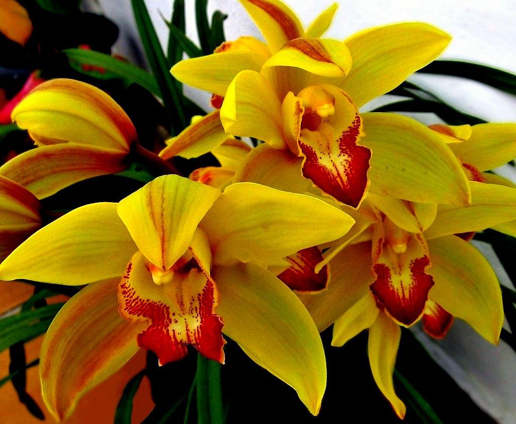 Fotos de vasos de flores naturais 54