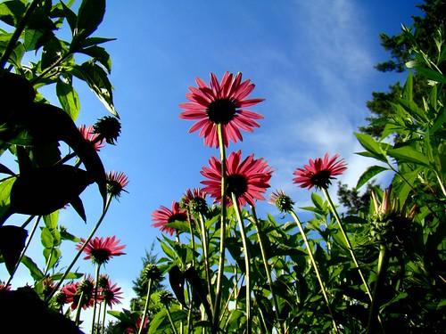 Wichita Botanical Garden Super Dave Flickr