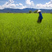 'Now That's A Green Field', Vietnam, Outside Luong Son
