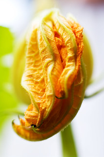 courgette | by soitma